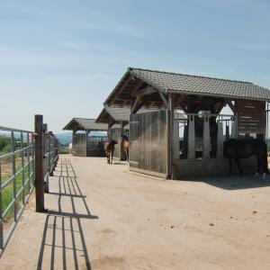 Pferdehaltungsanlagen - zeitgesteuerte Heuraufen im Offenstall