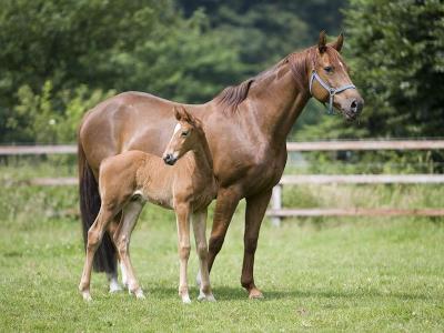 Basisqualifikation Pferdezucht