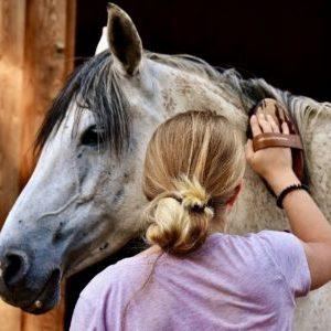 FN Pferdeführerschein Umgang