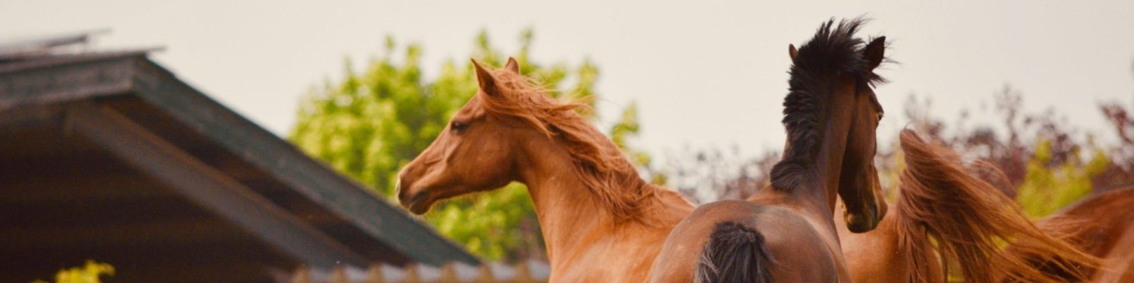 Kölner Pferde-Akademie - Aktuelles