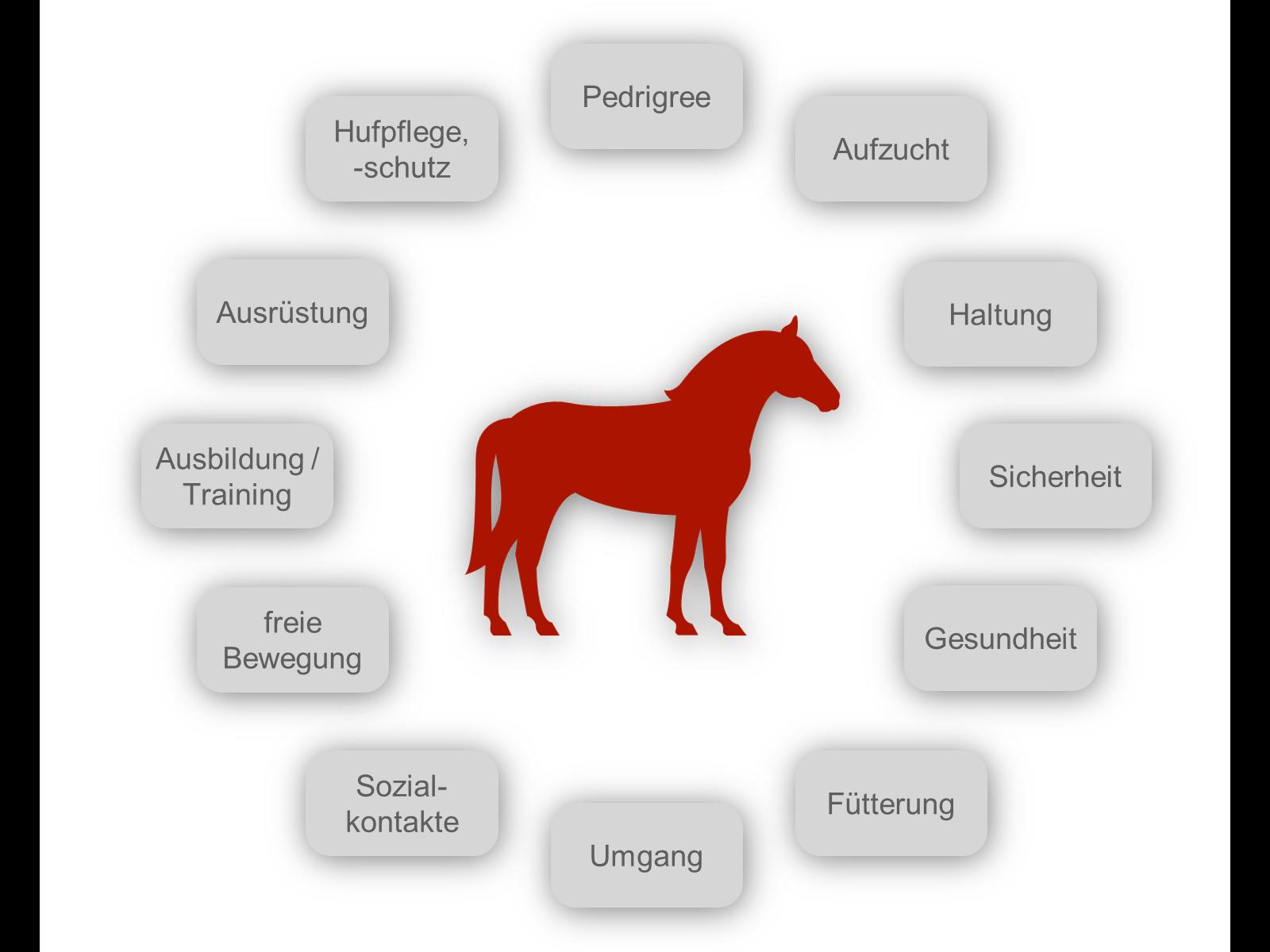 Was umfasst gute Pferdehaltung