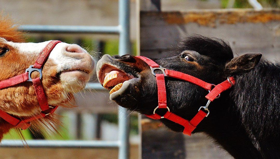 Lustige Ponies