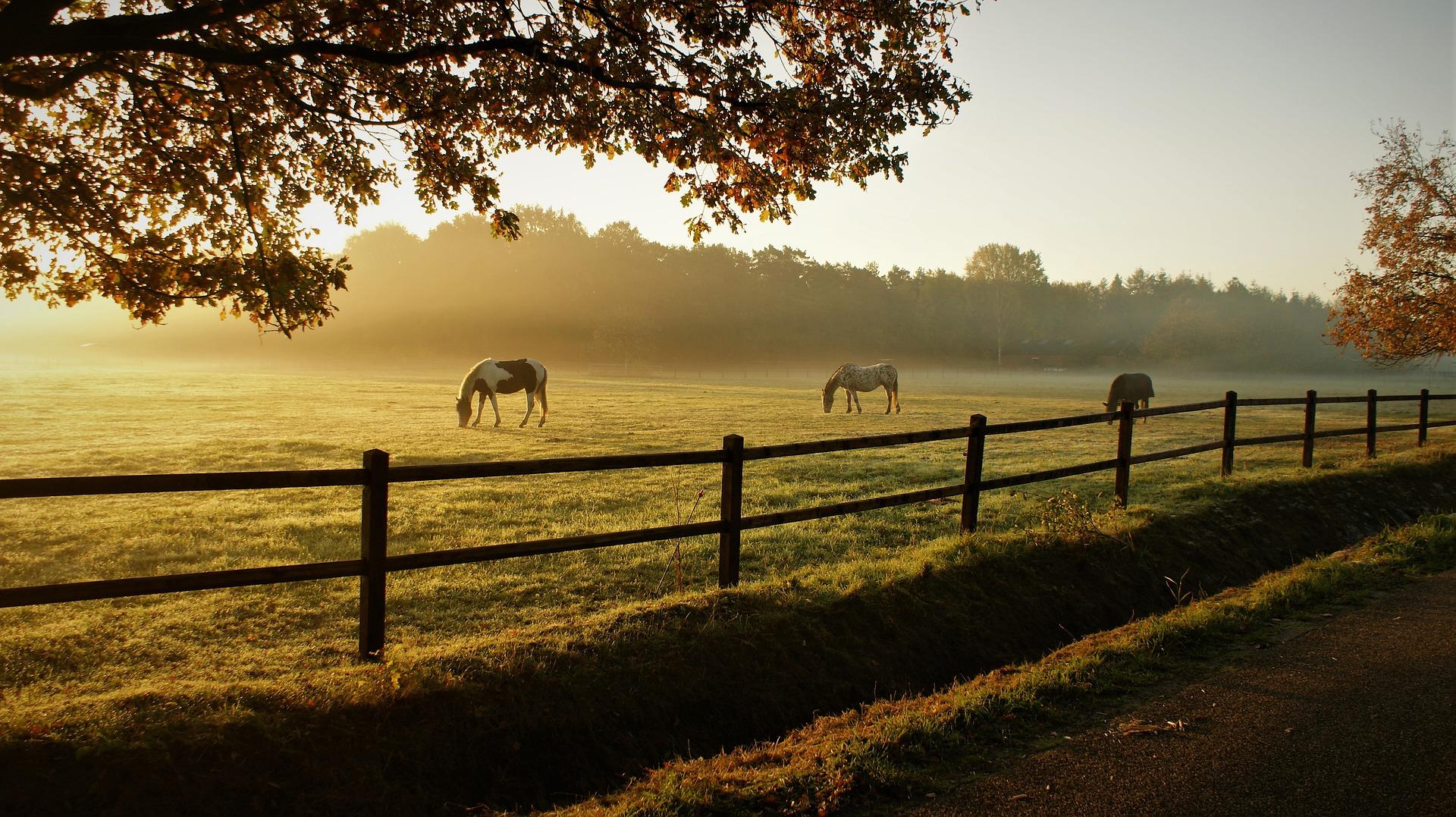 horses 5716127 1920