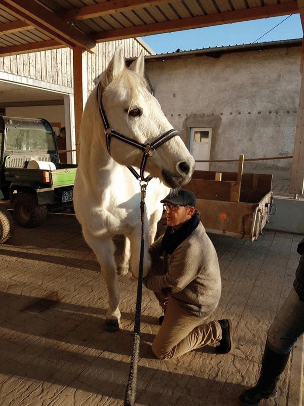 rq mit Pferd